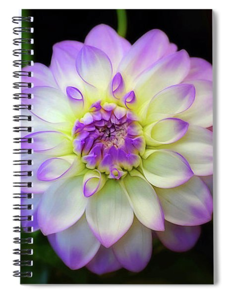 Spiral Notebook featuring the photograph Dahlia Eveline by Patti Whitten