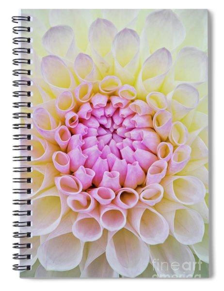 Dahlia Ryecroft Brenda T Flower Spiral Notebook