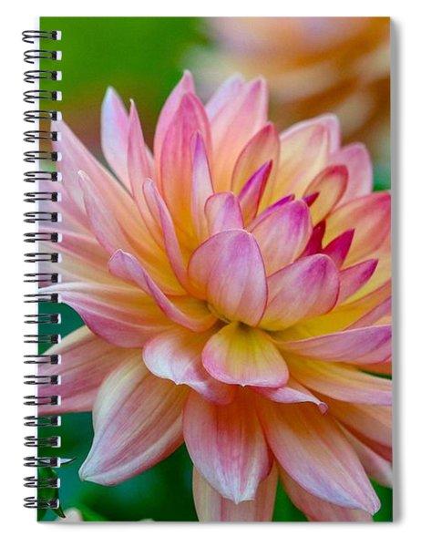 Dahlia Splendor Spiral Notebook