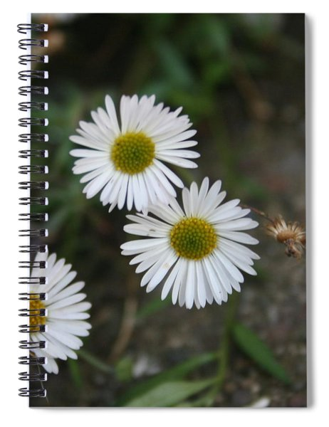 Daisy Daisy And Your White Petal Minding The Sun Core Spiral Notebook
