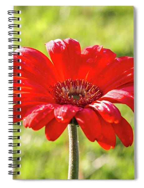 Daisy In The Rain Spiral Notebook
