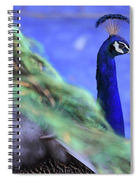 Dancing Peacock Spiral Notebook
