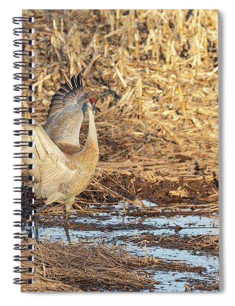 Dancing Sandhill Crane 2019-1 Spiral Notebook