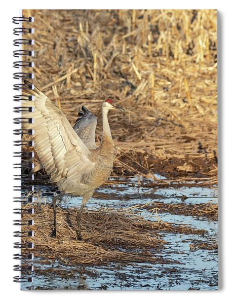 Dancing Sandhill Crane 2019-2 Spiral Notebook