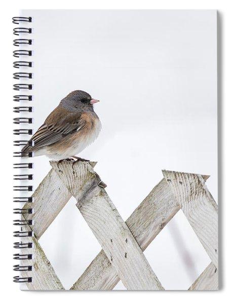 Dark-eyed Junco 2019-1 Spiral Notebook