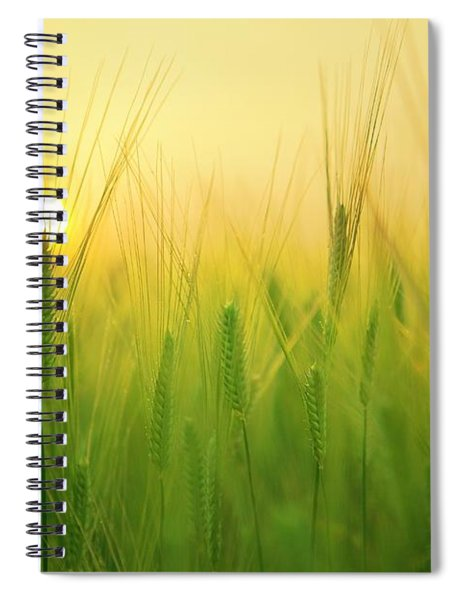 Dawn At The Wheat Field Spiral Notebook