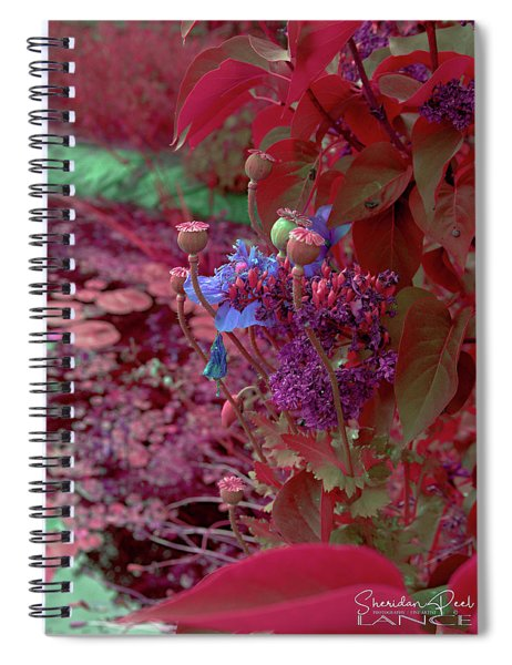 Day Of Red Spiral Notebook