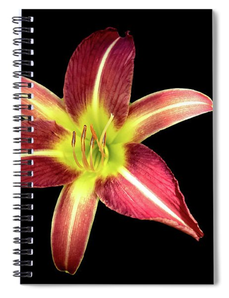Daylily On Black Spiral Notebook by Alison Frank