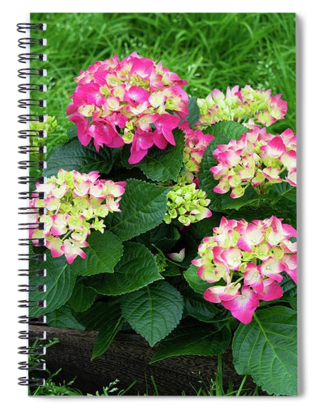 Spiral Notebook featuring the photograph Decorative Floral Pink Hydrangeas C031619 by Mas Art Studio