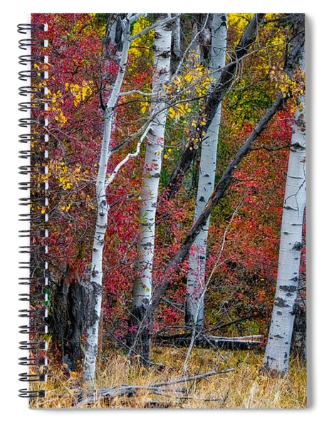 Deep Aspens Spiral Notebook