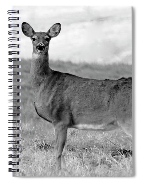 Deer In Black And White Spiral Notebook