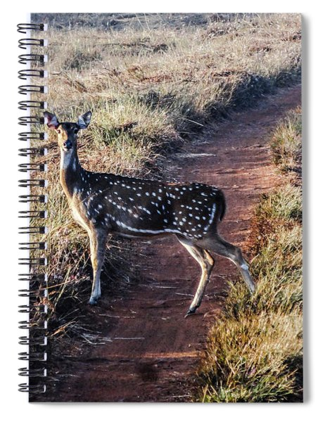 Deer Posing Spiral Notebook