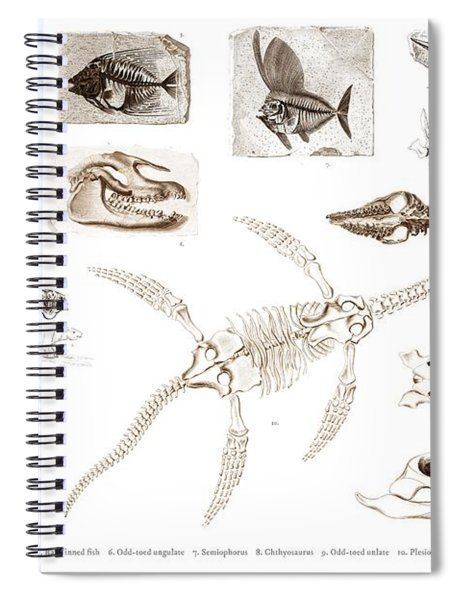 Different Types Of Ancient Fossils Illustrated By Charles Dessalines D' Orbigny  1806-1876 3 Spiral Notebook