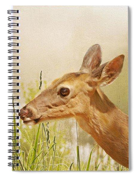 Doe At Dawn Spiral Notebook