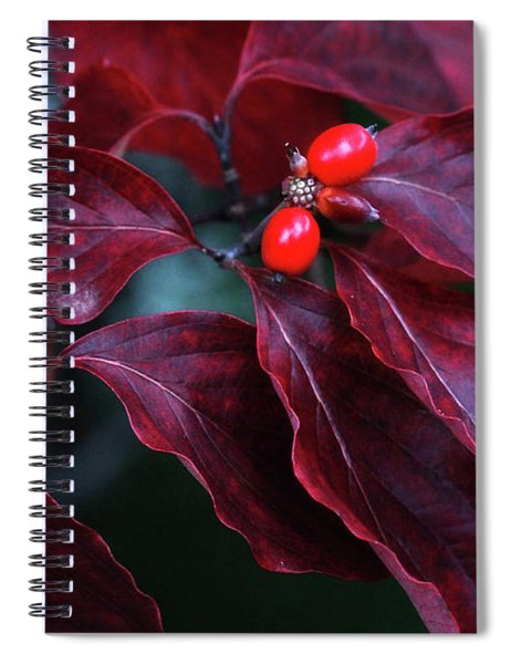 Dogwood Leaves In The Fall Spiral Notebook