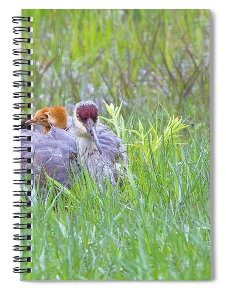 Double Down  Spiral Notebook