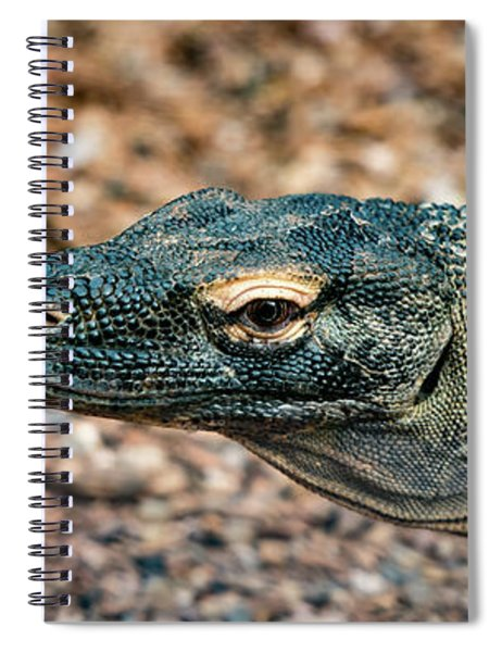 Dragon With No Fire Spiral Notebook