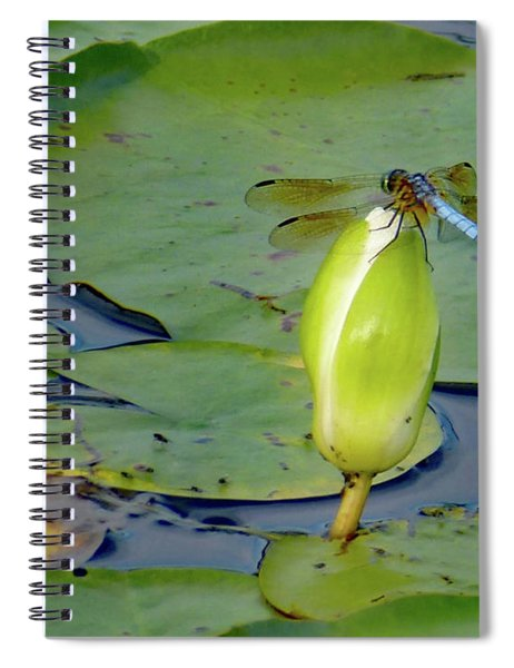 Dragonfly On Liliy Bud Spiral Notebook