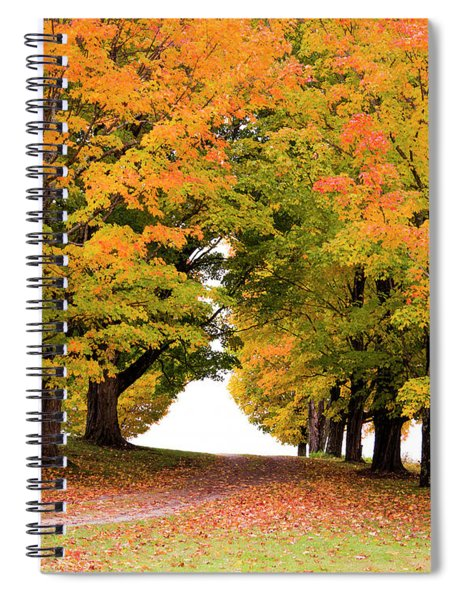 Driveway Lined With Maples Spiral Notebook