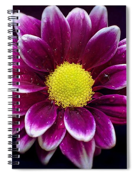 Droplets On A Daisy Spiral Notebook