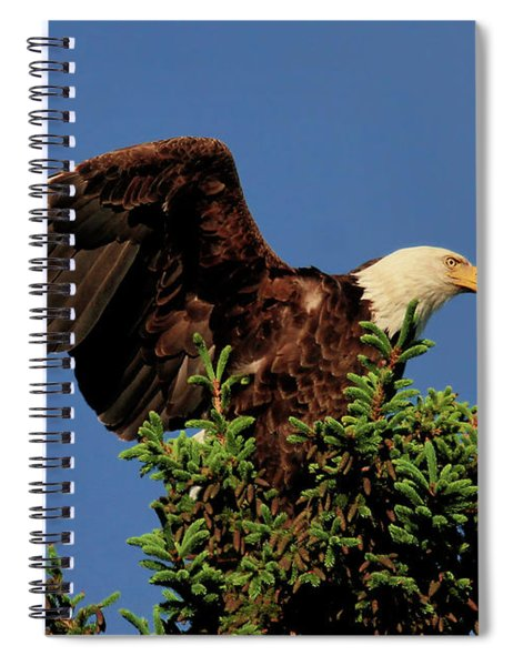 Eagle In Treetop Spiral Notebook