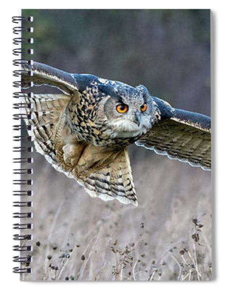 Eagle Owl Gliding Spiral Notebook