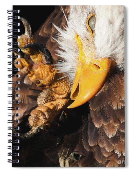 Eagle Scratch Spiral Notebook
