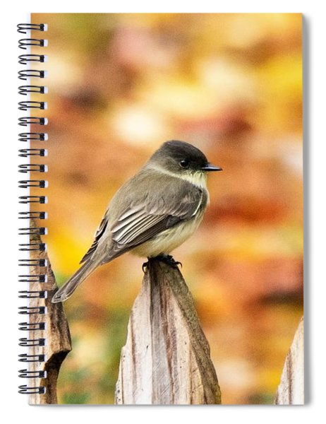 Eastern Phoebe In Autumn Spiral Notebook