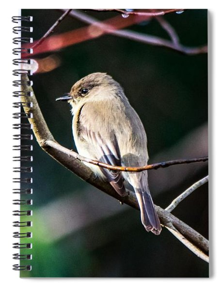 Eastern Phoebe In The Sun Spiral Notebook