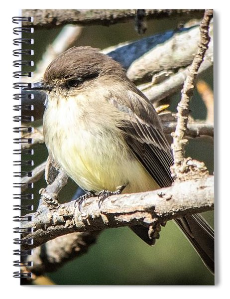 Eastern Phoebe In Winter Spiral Notebook
