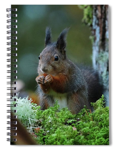 Eating Squirrel Spiral Notebook