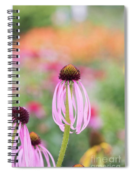 Spiral Notebook featuring the photograph Echinacea Simulata Flowering by Tim Gainey