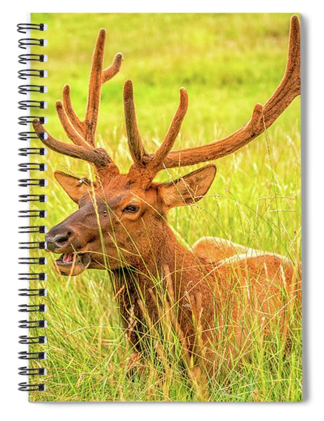 Elk Spiral Notebook