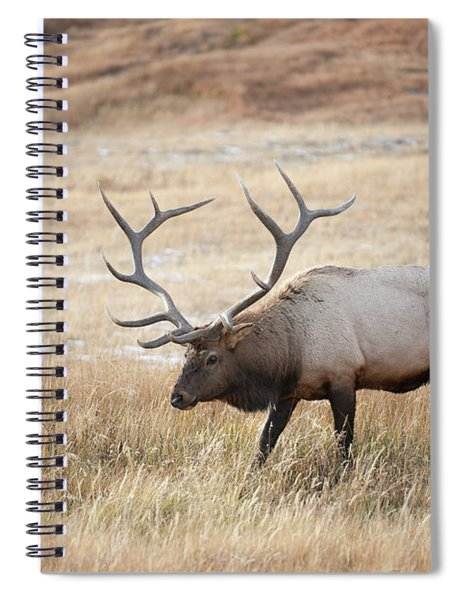 Elk In Yellowstone National Park Spiral Notebook