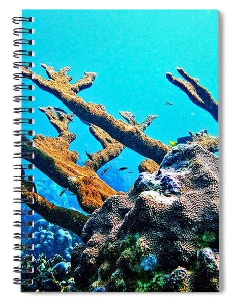 Elkhorn Spiral Notebook