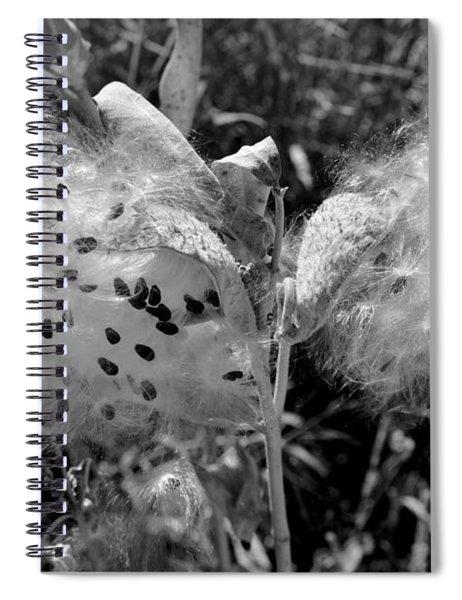 Emerging Milkweed Seeds In Black And White Spiral Notebook