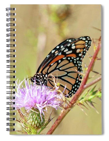End Of Summer Glow Monarch Butterfly Spiral Notebook