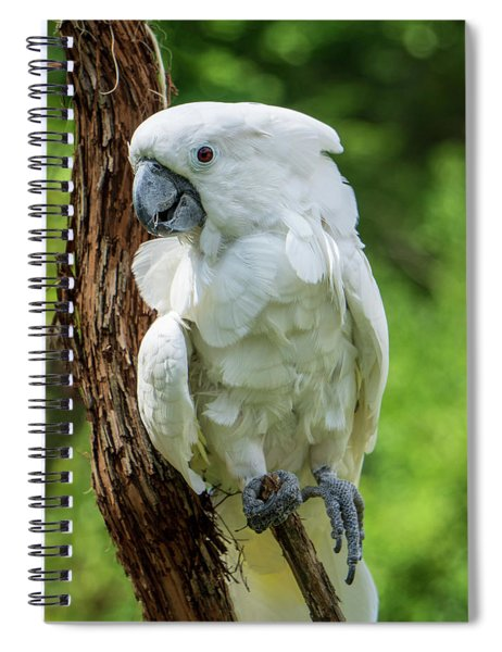 Endangered White Cockatoo Spiral Notebook