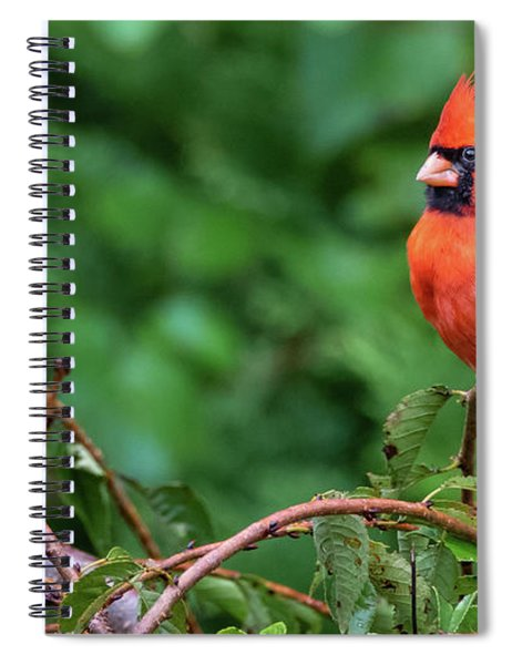 Envy - Northern Cardinal Regal Spiral Notebook