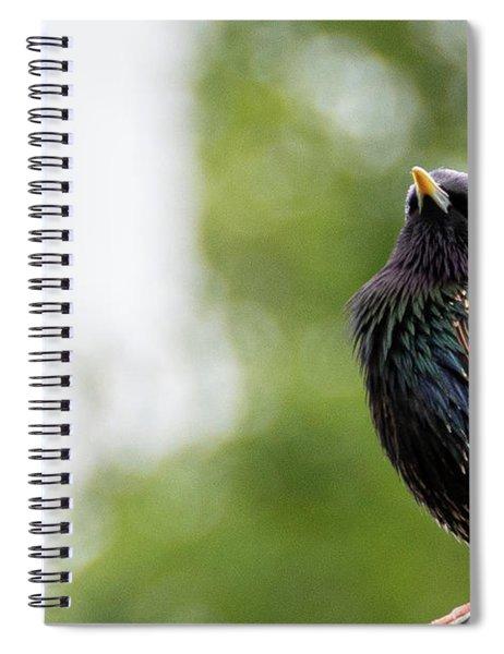 European Starling Spiral Notebook by Scott Lyons