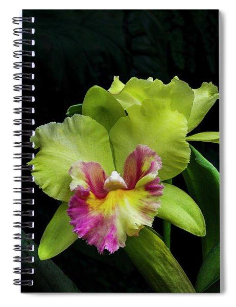 Cattleya Spiral Notebooks Fine Art America