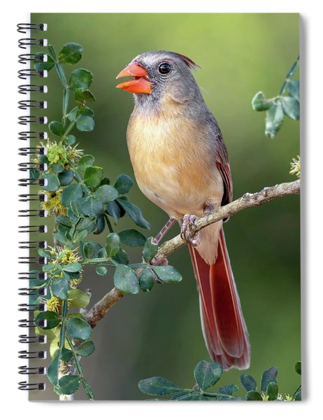 Fabulous Female Cardinal Spiral Notebook