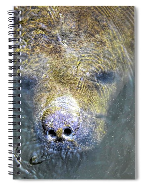 Face Of The Manatee Spiral Notebook