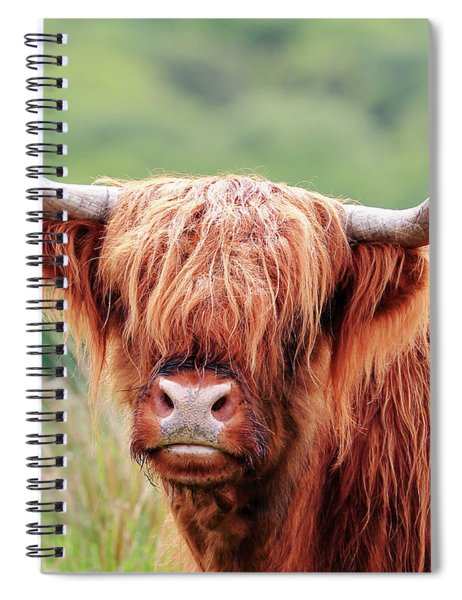 Face-to-face With A Highland Cow Spiral Notebook