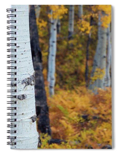 Spiral Notebook featuring the photograph Fall Aspen Forest by John De Bord