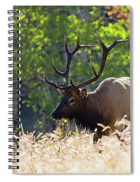 Fall Color Rocky Mountain Bull Elk Spiral Notebook