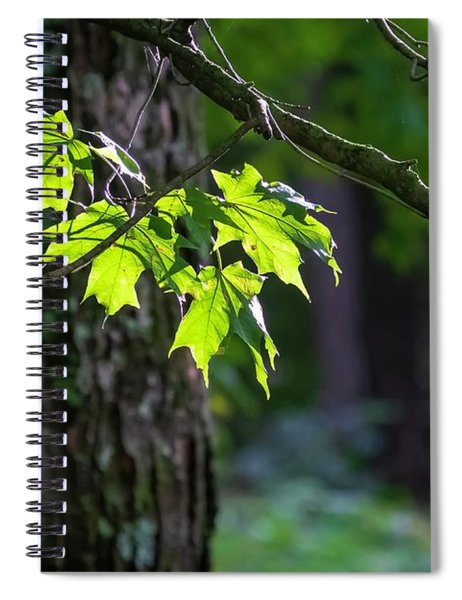 Fall Green Spiral Notebook