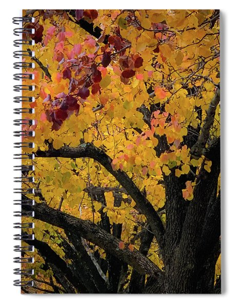 Fall In Carlyle Spiral Notebook