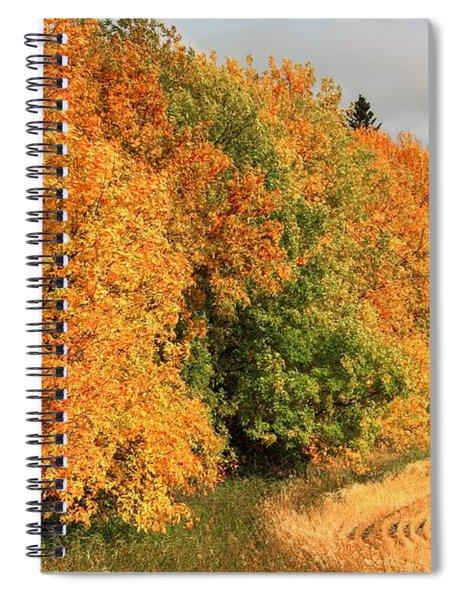Fall Row Spiral Notebook