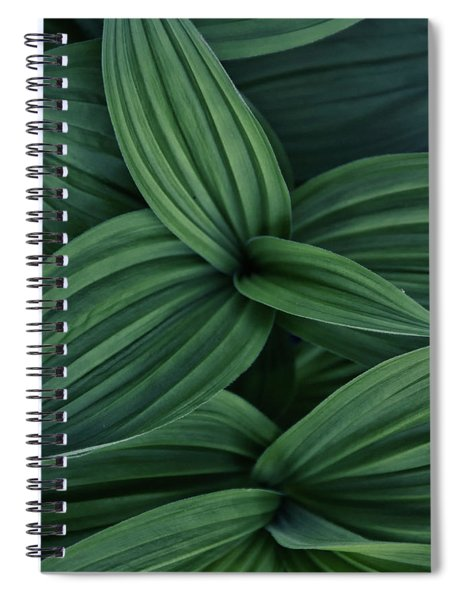 False Hellebore Plant Abstract Spiral Notebook